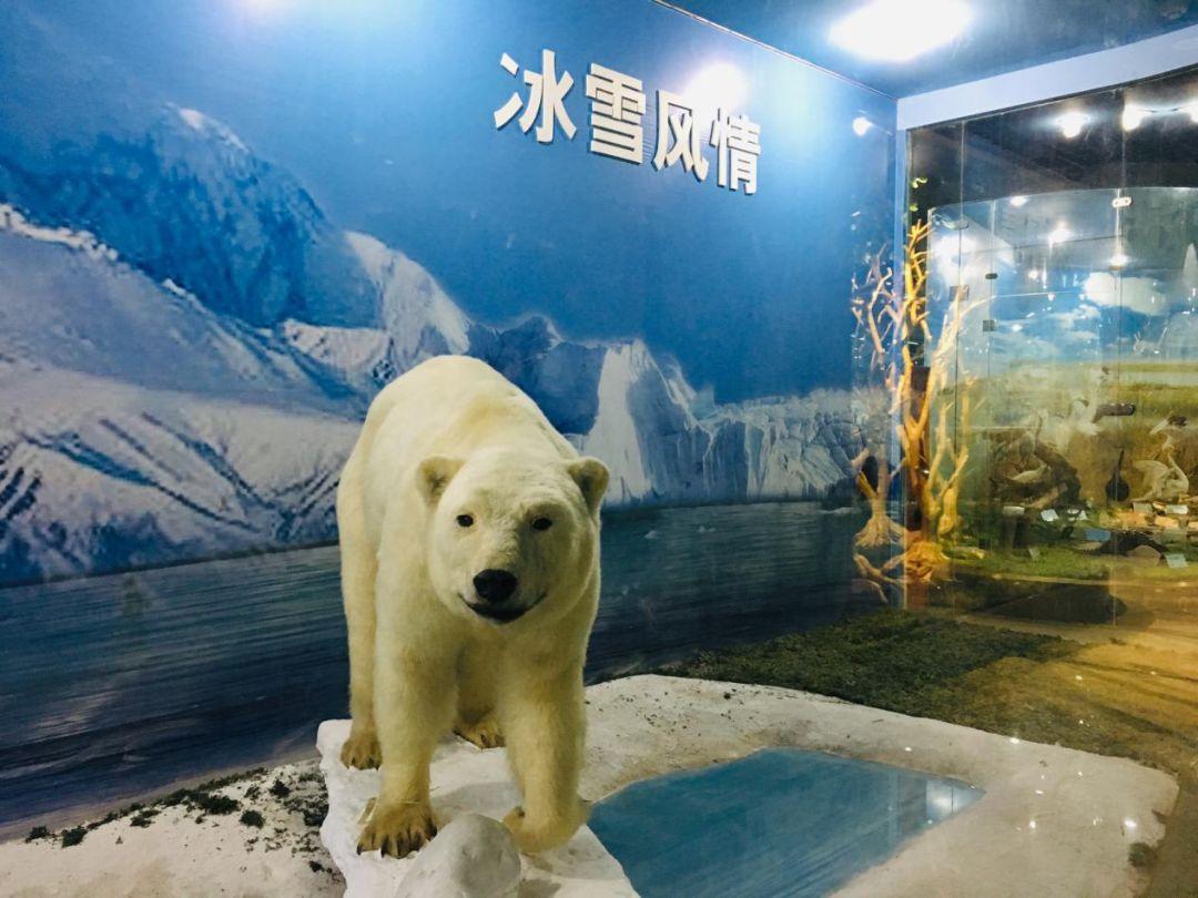 """郑州有个""""野生动物园"""",一万三千种野生动物藏屋里"""