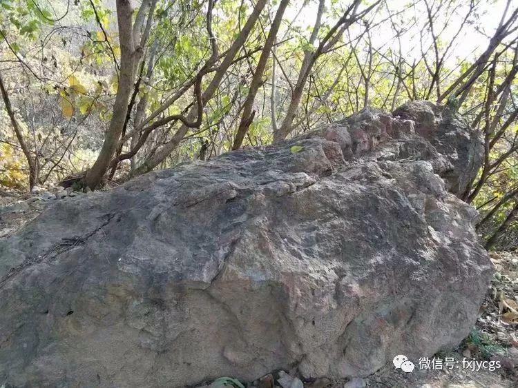 人贩子绑了一个5岁的小女孩,掀开被子后发现一条蛇,被引进蛇窝