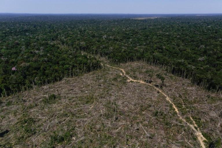 亚马逊森林现砍伐危机 环保斗士在战斗